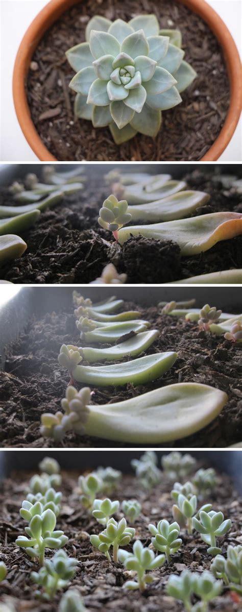 diy succulent garden ideas  tutorials styletic