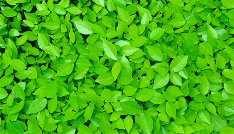 13 Of Bright Green Plants Leaves Wallpapers Hd