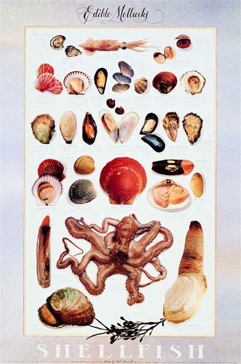 understanding food classification  fish  shellfish