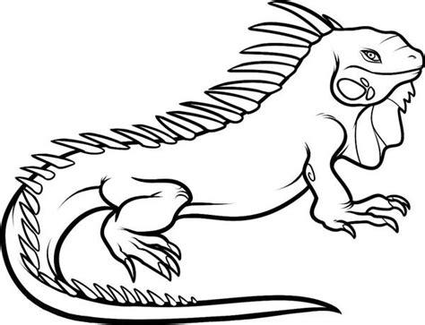 Coloring Iguana by Iguana Coloring Pages Kidsuki