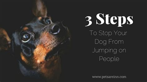 How To Stop My Puppy Jumping On The Sofa by A 3 Step Guide To Stop Your From Jumping On