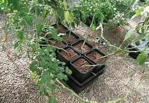 Hydrokultur Shop Online : nutriculture wilma system hydrokultur aeroponic 4 pflanzen growset aufzucht thc ~ Markanthonyermac.com Haus und Dekorationen