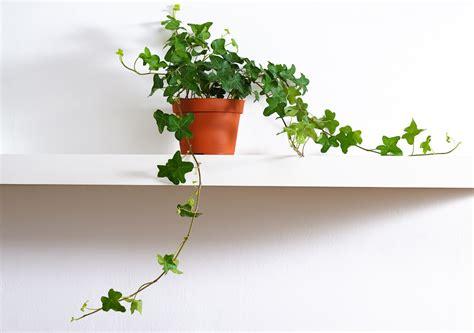plante pour chambre plante pour chambre liste ooreka