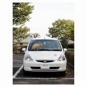 Honda Fit On Tumblr
