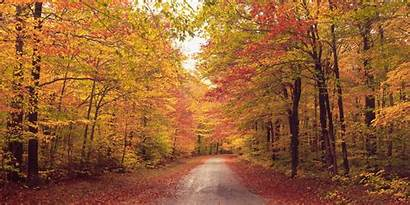 Autumn Wallpapers Forest Path Dirt