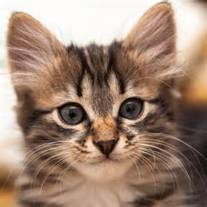 cat pic file avatar cat png wikimedia commons