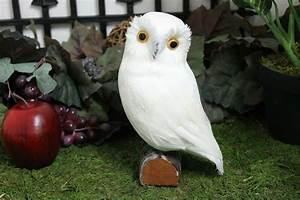 White Realistic Medium Feather Owl Bird Taxidermy Owls ...