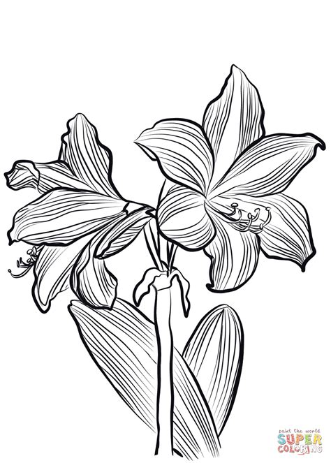 Coloring Drawing by Amaryllis O Brieni Coloring Page Free Printable Coloring