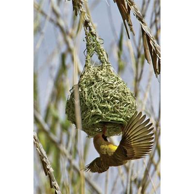 Weaver Bird - Photo 76002066 African Wheeling Adventure