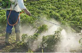 Inert    ingredients in pesticides increase their toxicity to humans  Pesticides And Herbicides