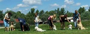 obedience school for dogs care 4 your pets With dog training camp
