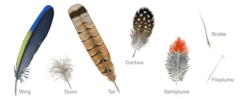 Everything You Need To Know About Feathers