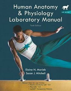 Introduction To Human Anatomy Laboratory Manual And Study