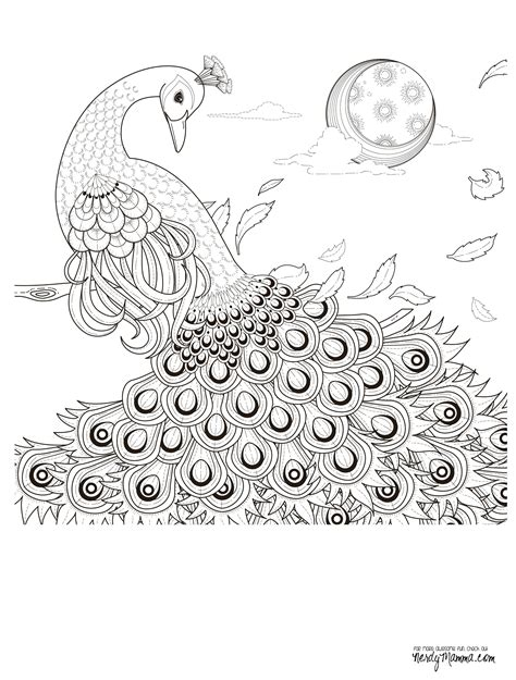 peacock coloring pages for adults 11 free printable coloring pages coloring