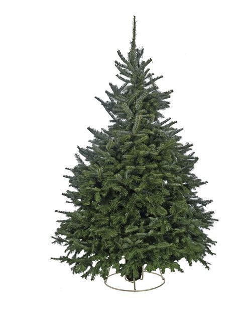 nordman fir fraser fir and noble fir christmas trees