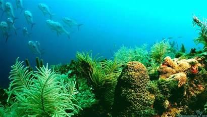 Marine Ocean Wallpapers Peaceful Sea Desktop Backgrounds