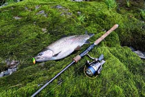 spinning rod  trout fast action  ultralight