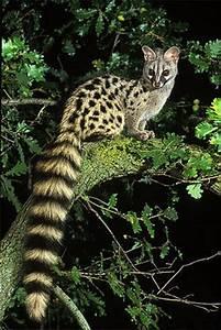 More Animals | Dusky's Wonders