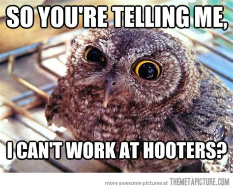 Funny Owl Meme - skeptical owl on job hunting the meta picture
