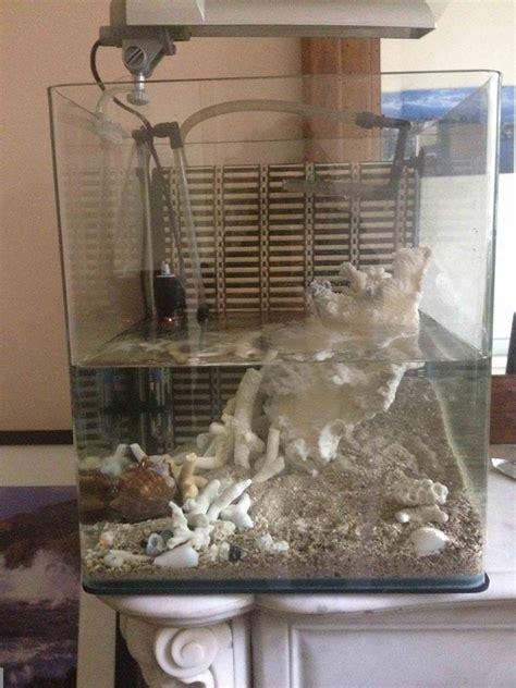 bernard l hermite aquarium eau douce cr 233 ation 30l pour un bernard l hermite forum poissons r 233 cifaux