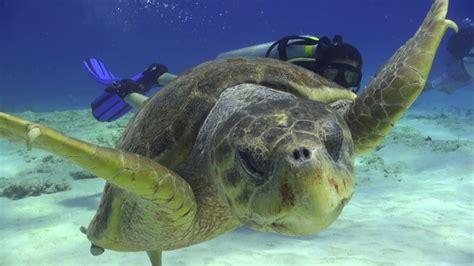 Best Dive Shop by Best Dive Shops In Cozumel Scuba Diving Instructors In Mexico