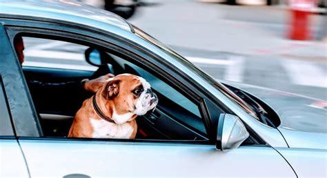 animali in cabina alitalia trasporto cani in aereo trasporto animali in aereo nel