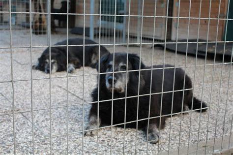 Styriarche  Das Erste Erlebbare Tierheim