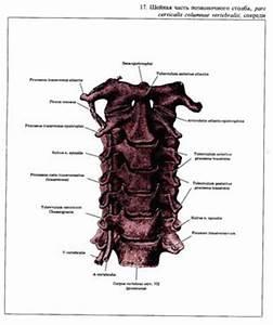 О самом главном лечение шейный остеохондроз