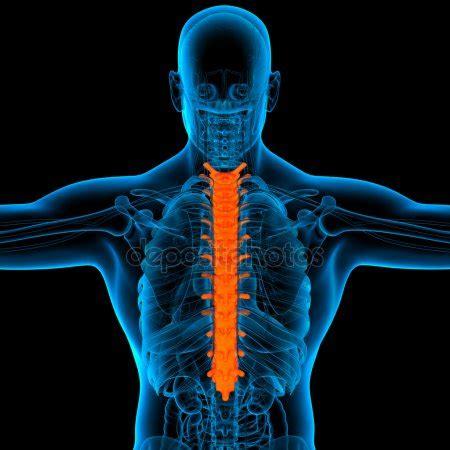 dolore gabbia toracica posteriore scheletro mostrando da vicino della gabbia toracica foto