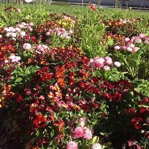Tapis De Fleurs : actualit s tapis de fleurs scea chamoulaud ~ Melissatoandfro.com Idées de Décoration