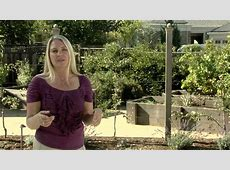 Raised Bed Gardens & Espaliered Fruit Trees YouTube