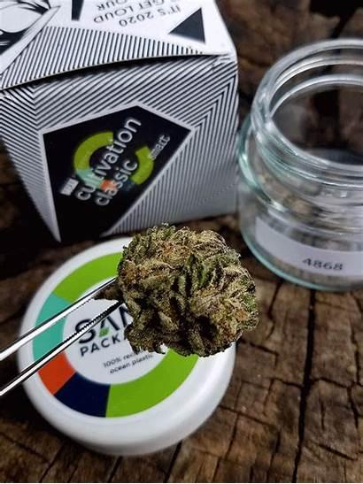 Cannabis Craft Classic Cultivation Judging Oregon Magazine