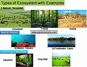 Ecosystem Examples - Bing images