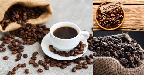 Green coffee beans are coffee beans that are not yet roasted and are completely raw. Types of Coffee Beans in India • India Gardening