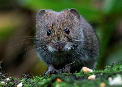 Norfolk Wildlife Trust