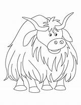 Yak Coloring Pages Colouring Cow Bestcoloringpages Sheets Yaks Printable Voluminous Highland Sheet Colors Animal Worksheet Bar Sunflower Userimages Cp Coloriage sketch template
