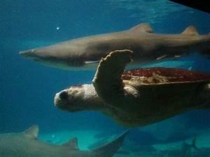 Turtle - Picture of New York Aquarium, Brooklyn - TripAdvisor