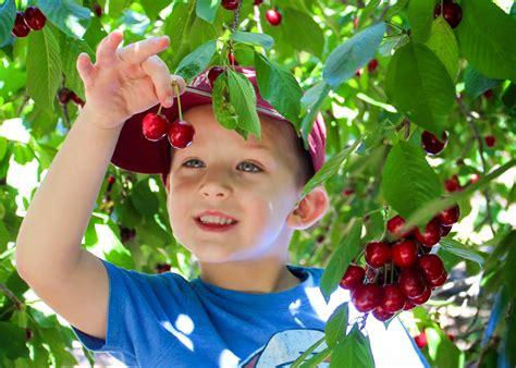 Nekada su deca komšijama krala trešnje, danas i kradu wirless