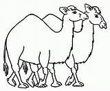 Caravan Camel Coloring 848px 07kb 1024 sketch template