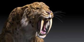 sabertooth cat the saber toothed tiger smilodon dinoanimals