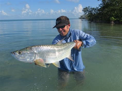 tarpon fish facts fishing fly orvis atlanticus belize megalops