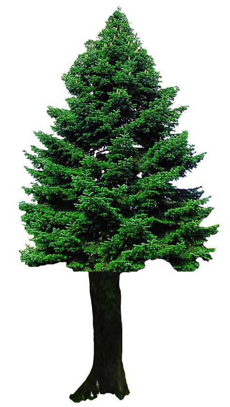 christmas tree png transparent image pngpix