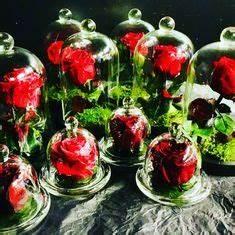 Rose Eternelle Sous Cloche : les 16 meilleures images du tableau rose eternelle sur ~ Farleysfitness.com Idées de Décoration