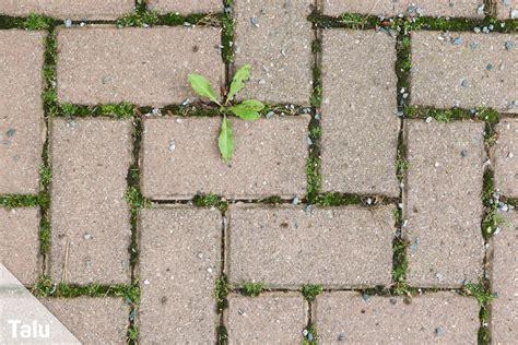 moos entfernen terrasse moos entfernen auf terrasse co anleitung hausmittel talu de
