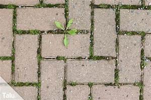 Moos Auf Gartenplatten Entfernen : moos entfernen auf terrasse co anleitung hausmittel ~ Michelbontemps.com Haus und Dekorationen