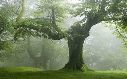 Forest Trees Nature Tree Landscape Desktop Wallpapers