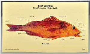Dissection Photo Guides For Biology And Life Science