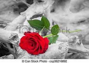 Schwarz Weiß Bilder Mit Farbe Städte : romanze melancholie strand farbe rose gegen schwarz white liebe concepts rotes ~ Orissabook.com Haus und Dekorationen