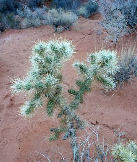3 desert plants no fixed address desert plants valley of fire