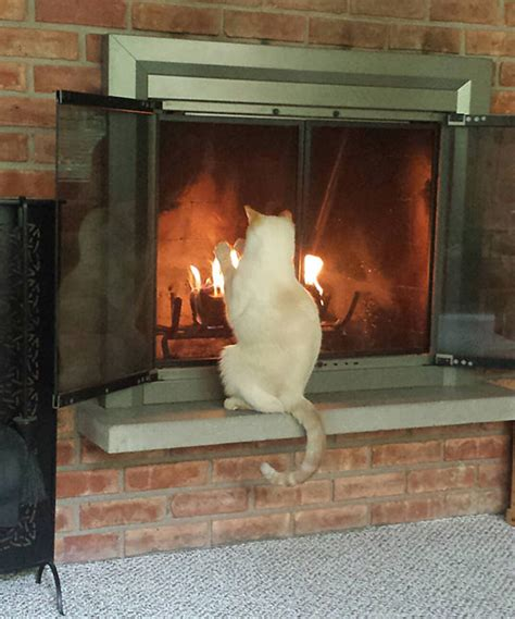 pictures  cats  prove  love warmth